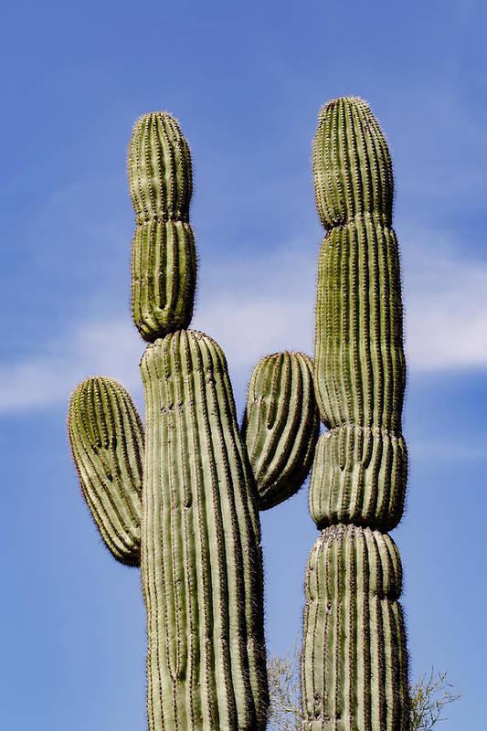 Adam Jones Art Print featuring the photograph Upward View Of Saguaro Cactus And Blue by Adam Jones