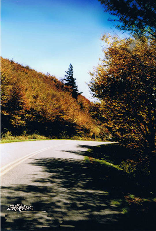 High In The Great Smoky Mtn. As You Round A Curve Stands This Noble Spruce. Art Print featuring the photograph Single Spruce by Seth Weaver