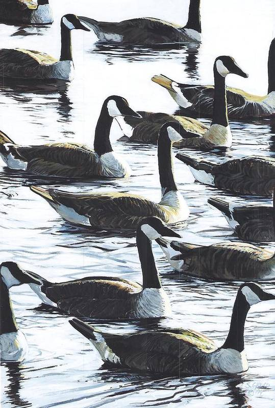 Wildllife Art Print featuring the painting Canada Geese 1 by Steve Greco