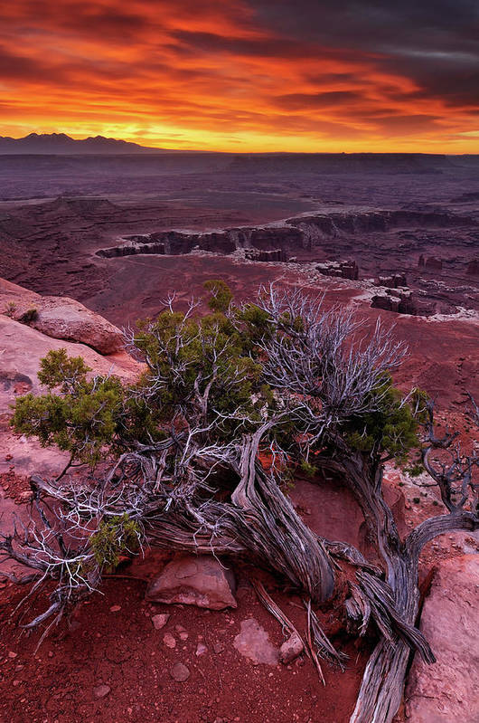 Scenics Art Print featuring the photograph Canyonlands Sunrise Landscape With Dry by Rezus