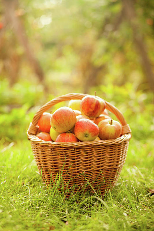 Grass Art Print featuring the photograph Basket With Apples by Tatyana Tomsickova Photography
