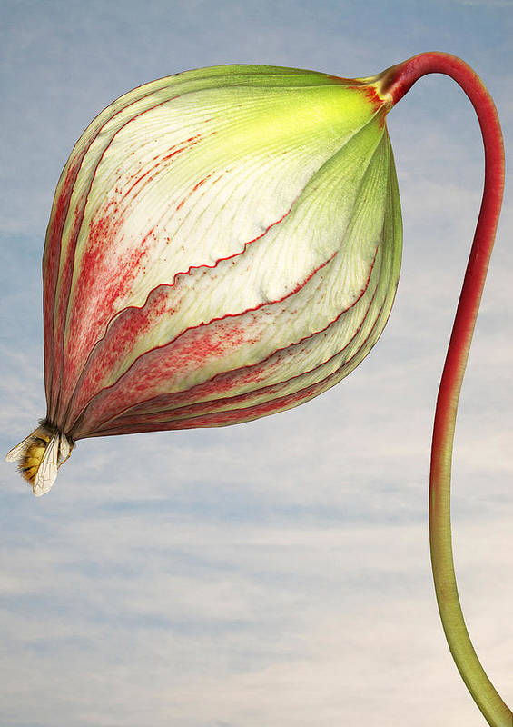 Artificial Art Print featuring the photograph Close up of triffid flower by Matt Walford