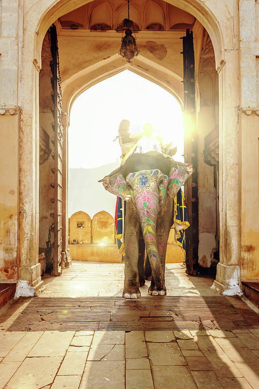 Working Animal Art Print featuring the photograph Elephant At Amber Palace Jaipur,india by Mlenny