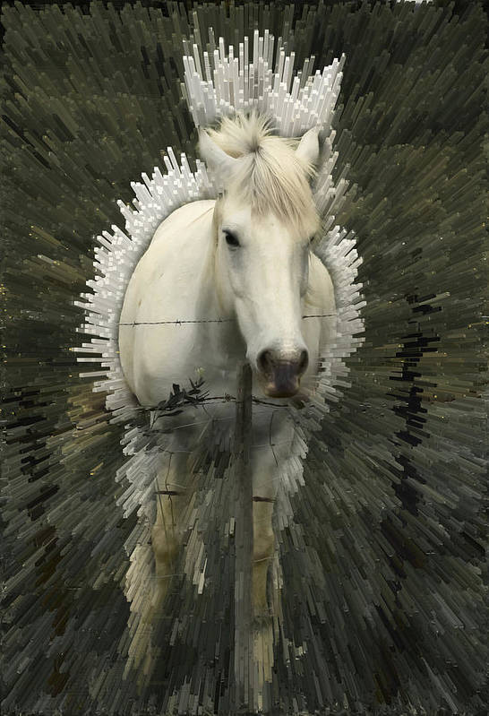 Horse Art Print featuring the photograph Fun With Extrude Tool by Jim Painter