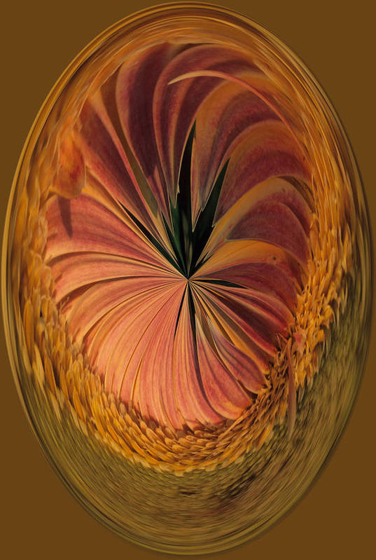 An Umber Gazania Is Depicted In An Abstract Art Print featuring the photograph Gazania Umber Abstract by Keith Gondron