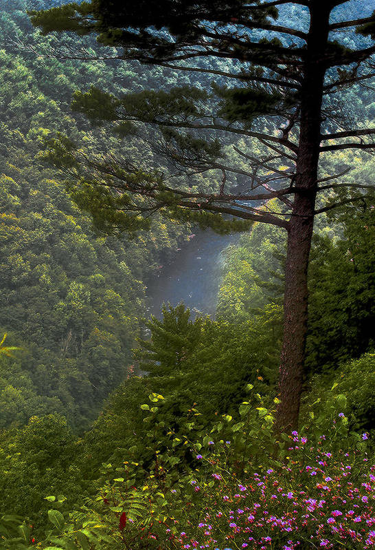 Tree Art Print featuring the photograph Grand Canyon of Pennsylvania by Jim Painter