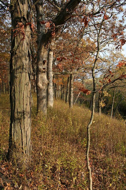 Landscape Art Print featuring the photograph Hillside Autumn by Dylan Punke
