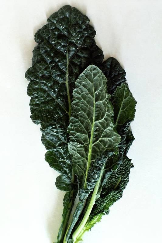 Food Art Print featuring the photograph Lacinato Kale by Romulo Yanes