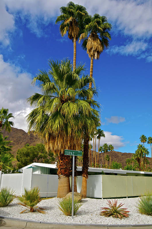 Fan Palm Tree Art Print featuring the photograph Mountains, Plants & Mid-century Home In by Jaylazarin