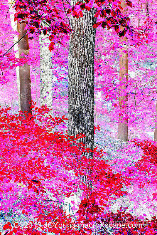 Dreamscape Red Forest Art Print featuring the photograph Red Forest by JCYoung MacroXscape