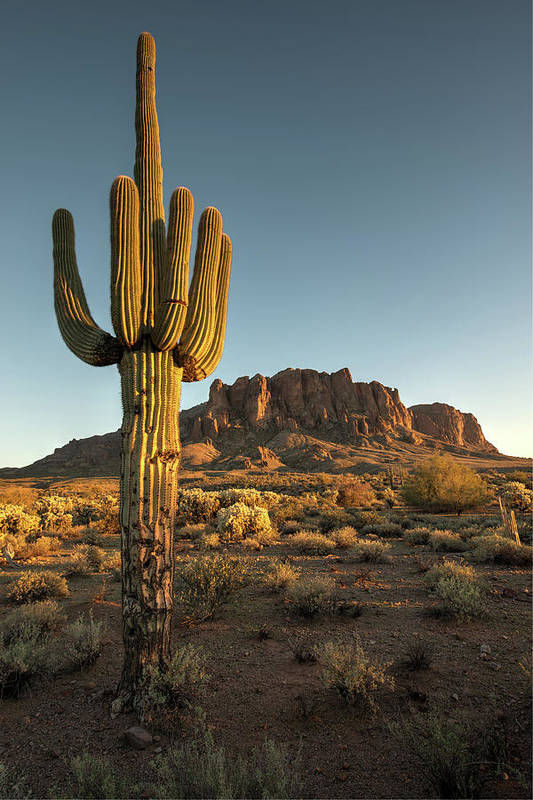Saguaro Cactus Art Print featuring the photograph Saguaro Cactus And Superstition by Kjschoen