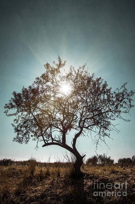 Dark Art Print featuring the photograph Single Tree by Carlos Caetano