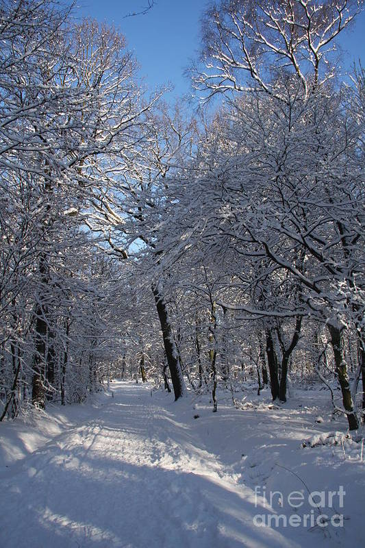 Forest Art Print featuring the photograph Snowy Trail by Christiane Schulze Art And Photography