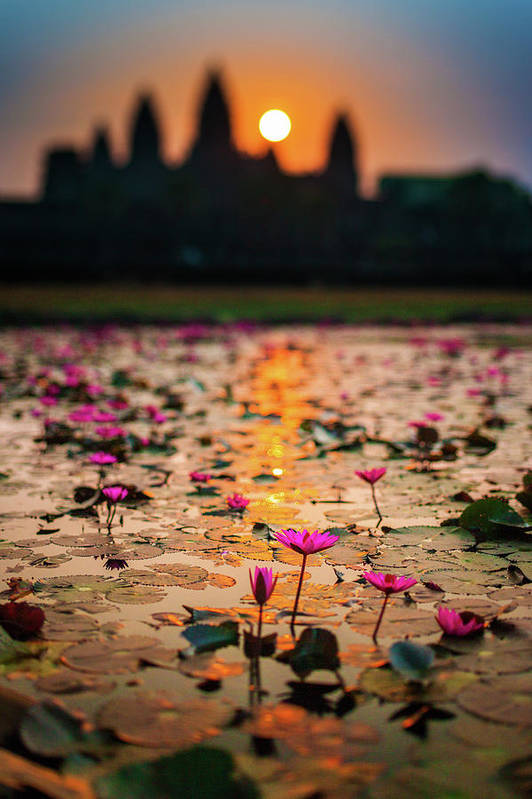 Tranquility Art Print featuring the photograph Sunrise Over The Lotus Flowers Of by © Francois Marclay
