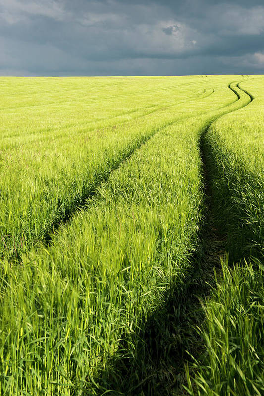 Scenics Art Print featuring the photograph Tire Tracks In Grain Field by Thomas Winz