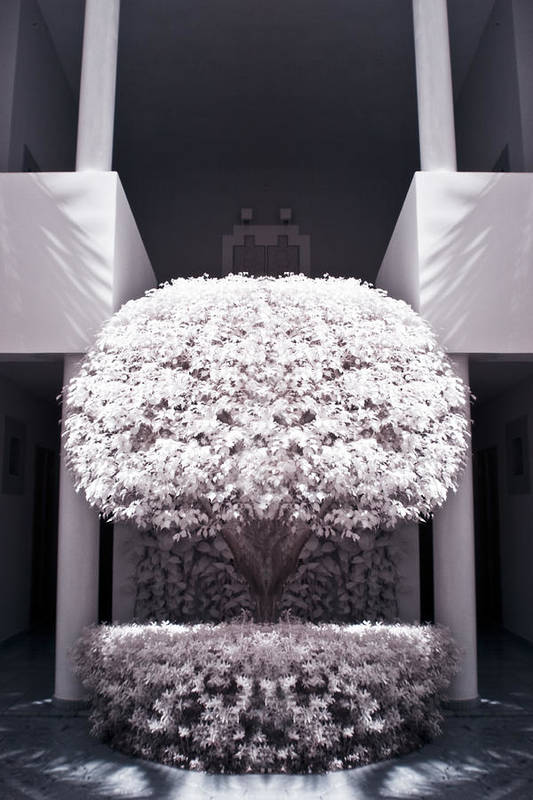 3scape Photos Art Print featuring the photograph Welcome Tree Infrared by Adam Romanowicz