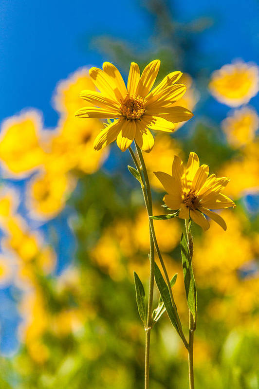Flowers Art Print featuring the photograph Wildflowers Standing Out by Chad Dutson
