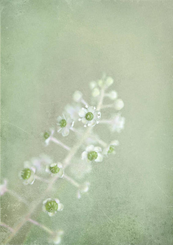Blossom Art Print featuring the photograph Blossoms Unfolding by Evelina Kremsdorf
