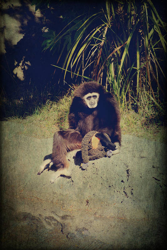 Primates Art Print featuring the photograph I Need A Hug by Laurie Search