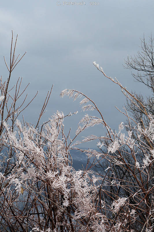 Ice Art Print featuring the photograph Ice Crystals by Carolyn Postelwait