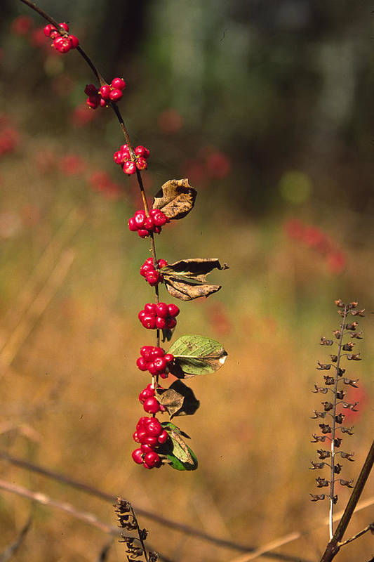 Fall Colors Art Print featuring the photograph Another Year by Randy Oberg