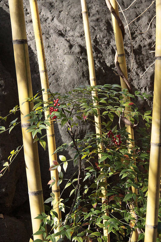 Bamboo Art Print featuring the photograph Bamboo by Linda A Waterhouse