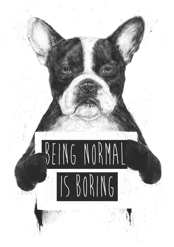 Bulldog Art Print featuring the drawing Being normal is boring by Balazs Solti