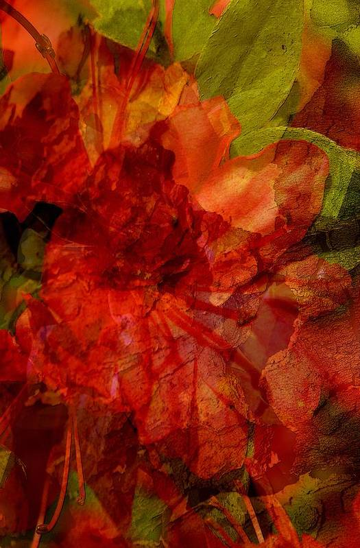 Abstract Art Print featuring the digital art Blood Rose by Tom Romeo