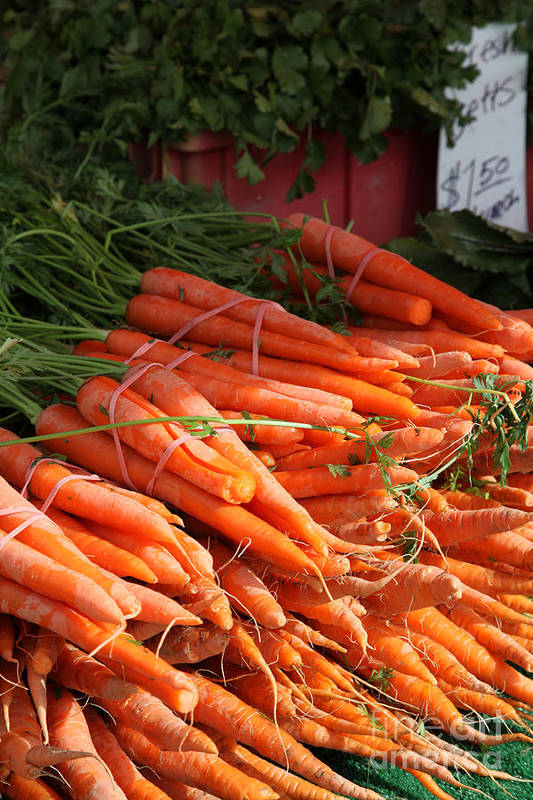 Stilllife Art Print featuring the photograph Carrot Bounty by Portraits By NC