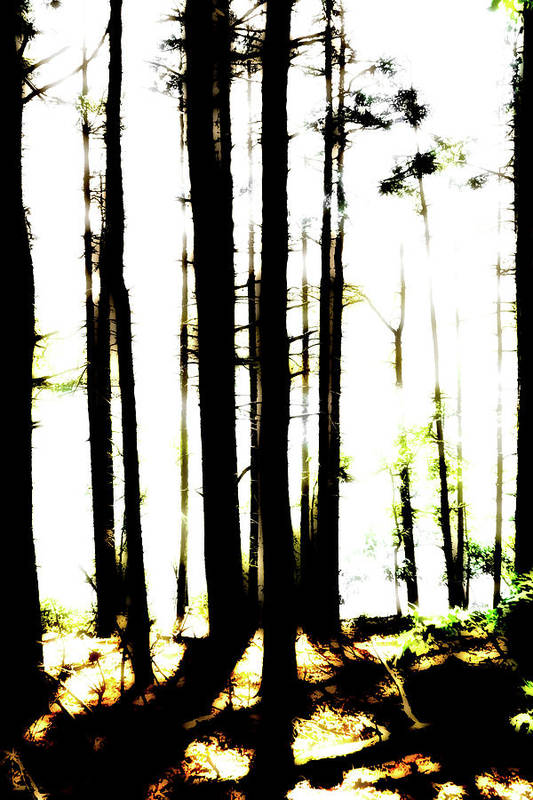 Bright Art Print featuring the photograph Dawn in the woods by Corey O'Hara
