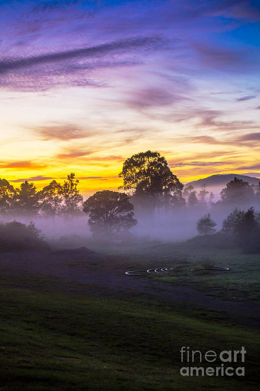 Paddockmorning Mist Art Print featuring the photograph Early morning mist by Sheila Smart Fine Art Photography