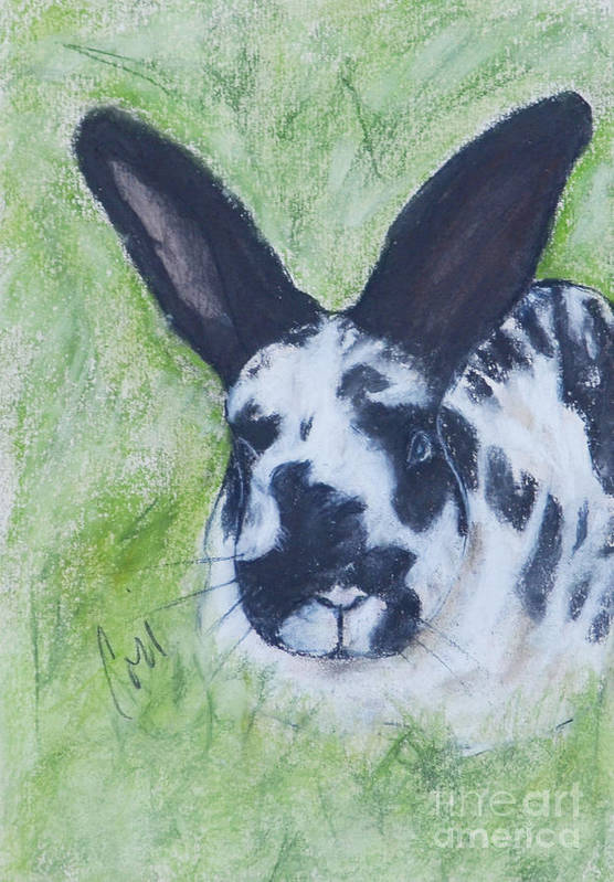 Bunny Art Print featuring the drawing Ears To Us by Cori Solomon
