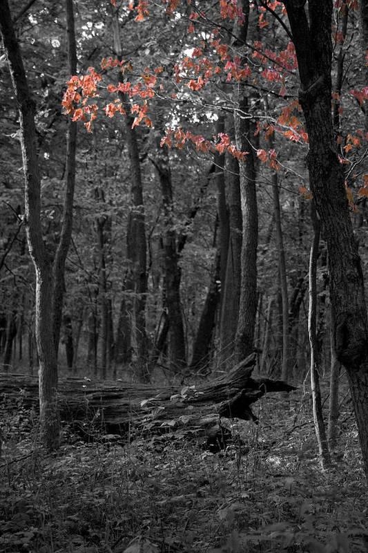 Fall Art Print featuring the photograph Faint Fall by Dylan Punke