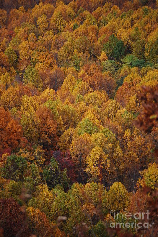 Fall Art Print featuring the photograph Fall Cluster by Eric Liller