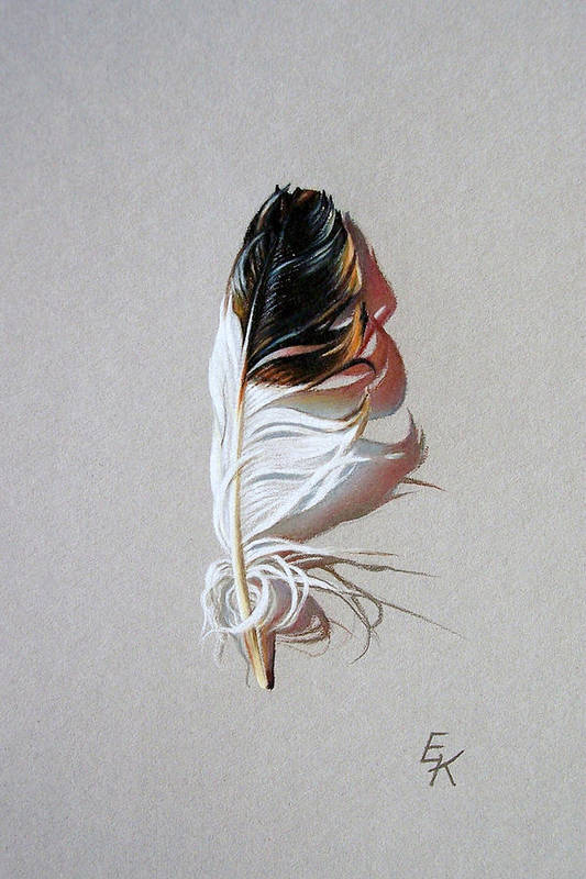 Still Life Feather Art Print featuring the drawing Feather and shadow 3 by Elena Kolotusha