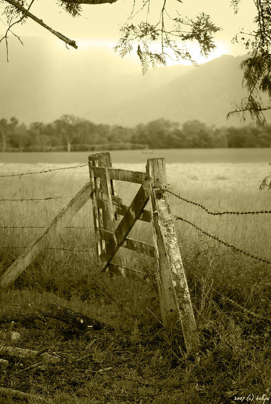 Gate Art Print featuring the photograph Forgotten Fields by Holly Kempe