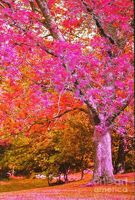 Fuschia Art Print featuring the photograph Fuschia Tree by Nadine Rippelmeyer