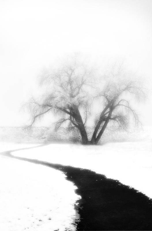 Tree Art Print featuring the photograph Getting There by Marilyn Hunt