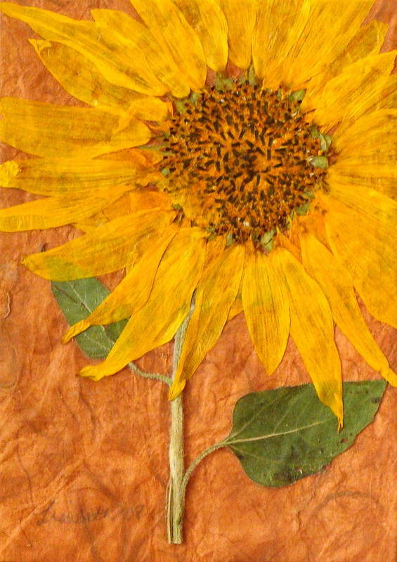 Petals Art Print featuring the mixed media Happiness by Lisabeth Billingsley