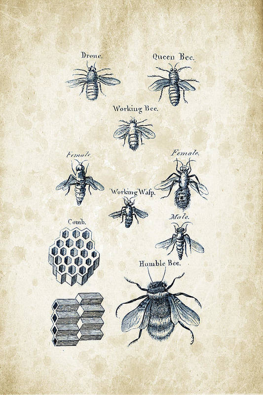 Bee Art Print featuring the digital art Insects - 1792 - 14 by Aged Pixel