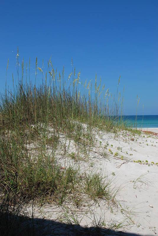 Beach Art Print featuring the photograph Island Sea Oats by Lisa Gabrius