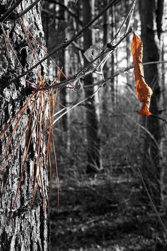 Autumn Art Print featuring the photograph Leaf and Needles by Dylan Punke