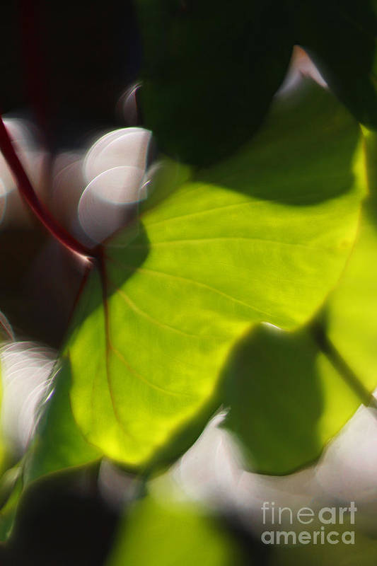 Green Art Print featuring the photograph Light I by Katherine Morgan