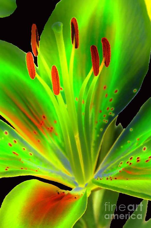 Diane Berry Art Print featuring the photograph Lime Twist by Diane E Berry