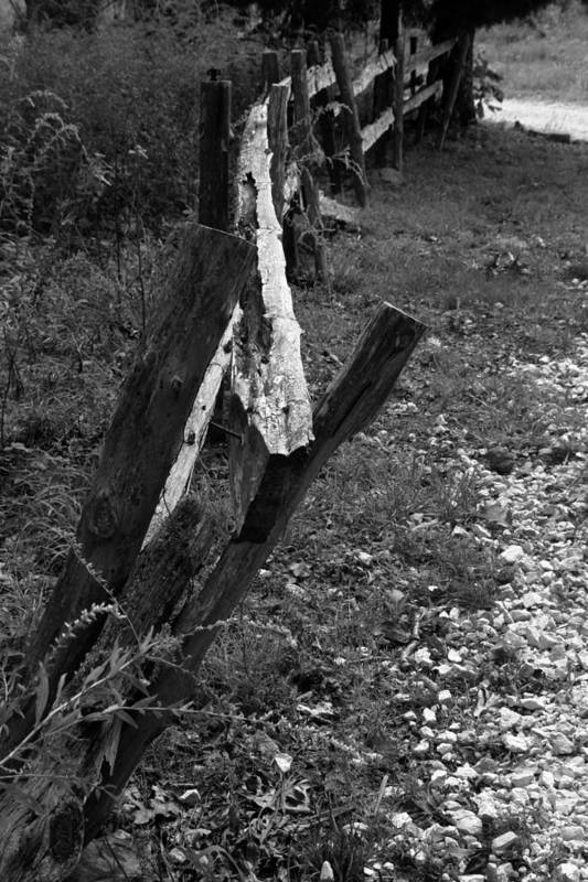 Ansel Adams Art Print featuring the photograph Momsvisitfence2 by Curtis J Neeley Jr