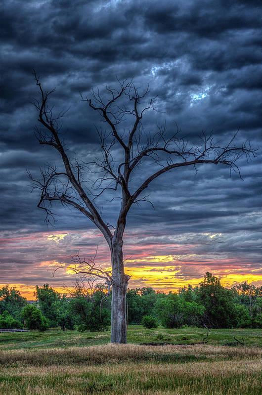 Palpatine Tree by Fiskr Larsen