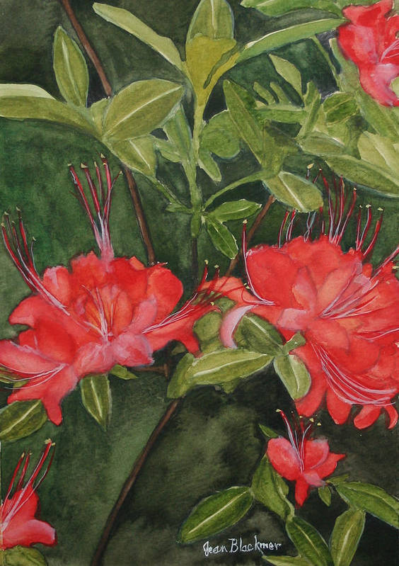 Flowers Art Print featuring the painting Red Blooms on the Parkway by Jean Blackmer
