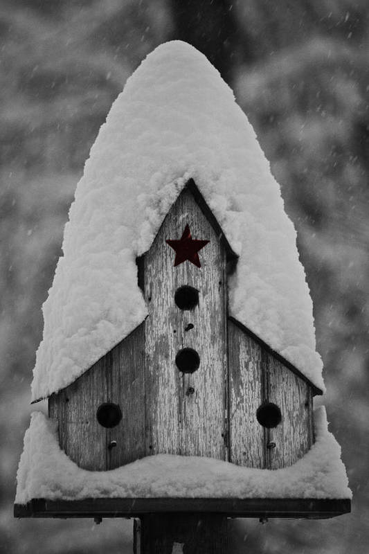 Snow Art Print featuring the photograph Snow Covered Birdhouse by Teresa Mucha