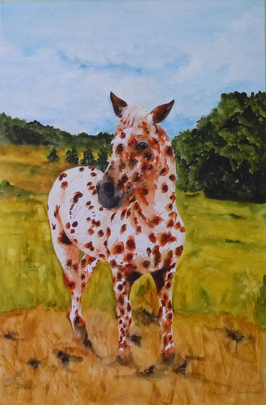 Horse Art Print featuring the painting Spotted in Hawaii by Jean Blackmer