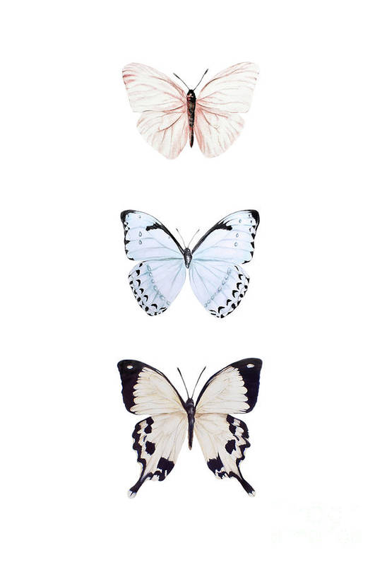 Butterfly Painting Art Print featuring the painting Three Butterflies by Marie Burke